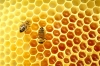 Bee-Hive-Cell.jpg
